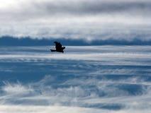 El águila en el cielo. Foto de archivo