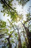 El ángulo bajo de la luz del sol a través de los árboles viene abajo en el d3ia Fotos de archivo