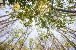 El ángulo bajo de la luz del sol a través de los árboles viene abajo en el d3ia Fotografía de archivo libre de regalías