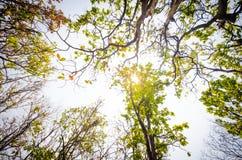 El ángulo bajo de la luz del sol a través de los árboles viene abajo en el d3ia Imagen de archivo