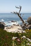 El árbol árido asoma hacia fuera al océano Imágenes de archivo libres de regalías
