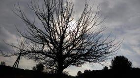 El árbol Fotos de archivo libres de regalías