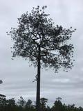 El árbol imagen de archivo libre de regalías
