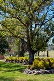 El árbol Fotografía de archivo