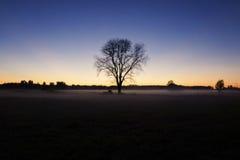 El árbol Fotos de archivo