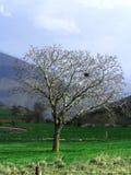 El árbol Imágenes de archivo libres de regalías