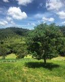 El árbol Fotografía de archivo libre de regalías