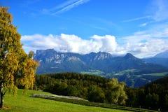 El árbol (abedul) en montañas de las montañas Fotos de archivo libres de regalías