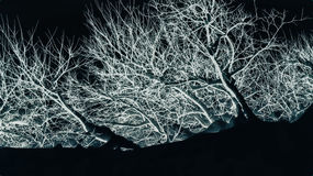 El árbol abstracto blanco Imagen de archivo libre de regalías