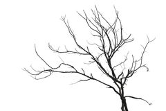 El árbol aisló Fotos de archivo libres de regalías