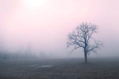 El árbol alcanzó en madrugada imágenes de archivo libres de regalías