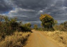 El árbol alineó el camino de tierra Imagen de archivo