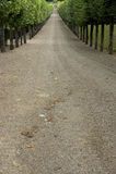 El árbol alineó la pista de la grava que llevaba para cultivar un huerto, el castillo francés de villandry, Francia Fotos de archivo libres de regalías