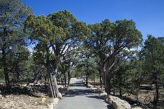 El árbol alineó el rastro del borde en Grand Canyon Imagen de archivo