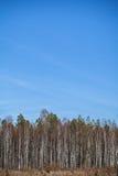 El árbol amarillo del otoño y el cielo azul enmarcan el fondo Foto de archivo libre de regalías