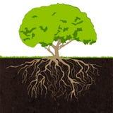 El árbol arraiga bosquejo ilustración del vector