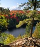El árbol arraiga en el acantilado con el Algonquin del bosque del otoño Fotografía de archivo libre de regalías