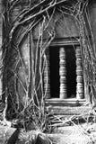 El árbol arraiga en el templo de Beng Melea en Camboya Foto de archivo libre de regalías