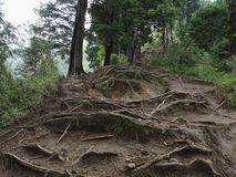 El árbol arraiga la lluvia Forest Eroded Imagenes de archivo