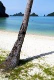 El árbol blanco de la playa de la isla phangan de la bahía del kho de Asia oscila Foto de archivo