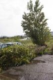 El árbol cae abajo Imagen de archivo