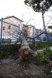 El árbol caido 2 Foto de archivo libre de regalías