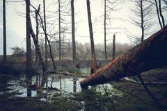 El árbol caido imagenes de archivo