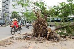 El árbol caido dañó en la calle por la tormenta pesada natural del viento fotos de archivo