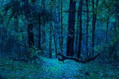 El árbol caido está iluminado brillantemente en el bosque de la noche Imágenes de archivo libres de regalías