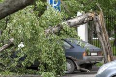 El árbol cayó en el coche Foto de archivo libre de regalías