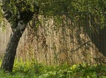 El árbol cerca de la cerca Imagen de archivo libre de regalías