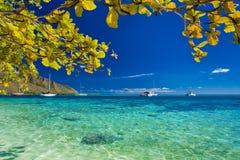 El árbol con amarillo se va sobre la playa en Moorea, Tahití imagenes de archivo