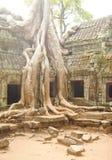 El árbol con la estructura antigua en Camboya Imágenes de archivo libres de regalías