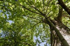 El árbol con verde sale del fondo de la visión inferior imagen de archivo libre de regalías