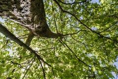 El árbol con verde sale del fondo de la visión inferior fotos de archivo