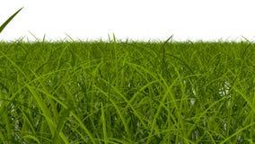 El árbol crece actividad stock de ilustración
