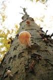 El árbol crece en cielo Imagenes de archivo