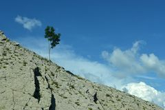 El árbol crece en la pared Fotografía de archivo libre de regalías