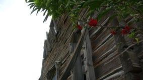El árbol creció cerca de las ruinas de madera viejas de la iglesia metrajes