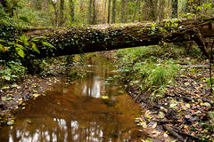 El árbol cruza encima el río Imagen de archivo