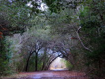 El árbol cubrió la carretera nacional de la suciedad Foto de archivo libre de regalías
