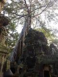 El árbol cubrió un templo antiguo Imágenes de archivo libres de regalías