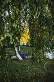 El árbol de abedul con amarillo y verde se va en otoño, con la pequeña profundidad del campo Fotografía de archivo