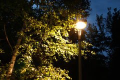 El árbol de abedul es encendido por una linterna en el parque Imagenes de archivo