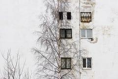 el árbol de abedul y la ventana en el fondo de casas con las ventanas enyesaron el yeso blanco Fotografía de archivo