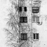 el árbol de abedul y la ventana en el fondo de casas con las ventanas enyesaron el yeso blanco Imagen de archivo libre de regalías