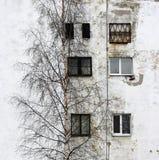 el árbol de abedul y la ventana en el fondo de casas con las ventanas enyesaron el yeso blanco Fotos de archivo libres de regalías