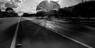 El árbol de Brasilia Imagenes de archivo