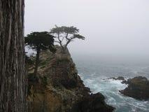 El árbol de Cypress solitario Fotografía de archivo
