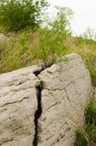 El árbol de la azufaifa crece en grietas Imágenes de archivo libres de regalías